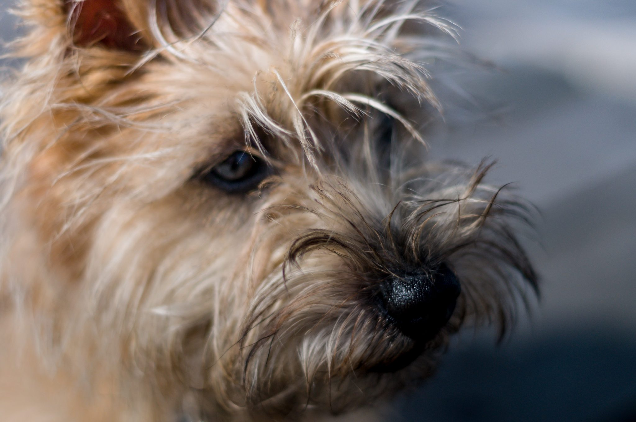 Tim Hewage Photography, dog portrait, pet photos, Isle of Wight